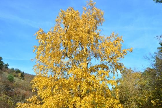 Bunter Baum vor blaüm Himmel Wachau