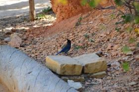 Bryce_Canyon_09_big.jpg