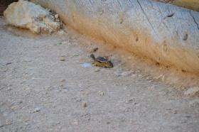 Bryce_Canyon_10_big.jpg