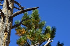 Bryce_Canyon_13_big.jpg