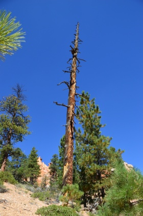 Bryce_Canyon_17_big.jpg