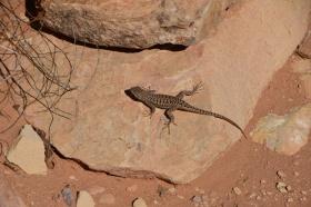 Canyonland_Nationalpark_02_big.jpg