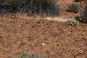 Canyonland_Nationalpark_07_big.jpg