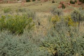 Canyonland_Nationalpark_29_big.jpg