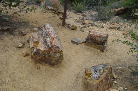 Escalante_Petrified_Forrest_04_big.jpg