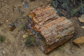 Escalante_Petrified_Forrest_09_big.jpg