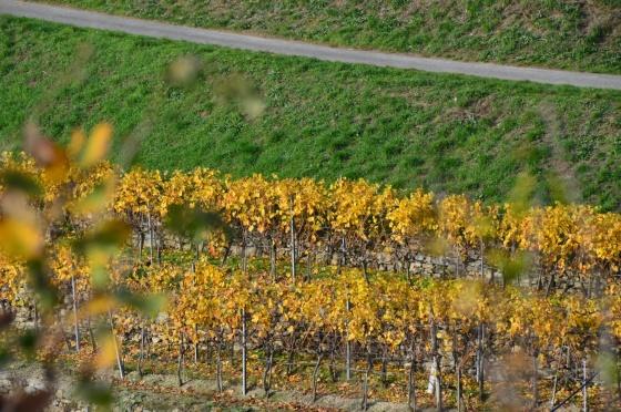 Weinlaub Dürrnstein