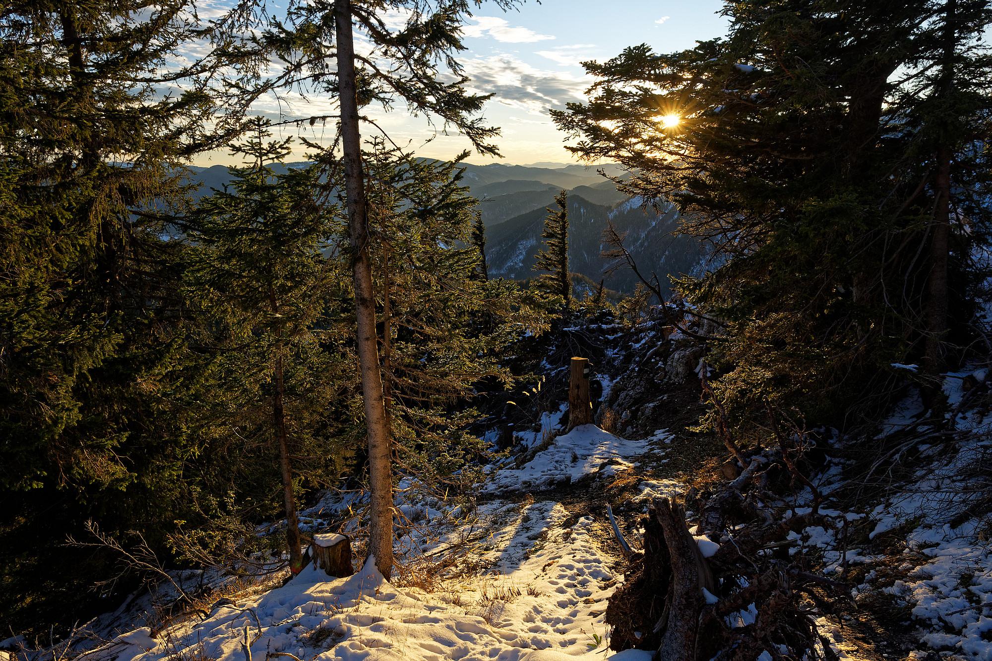 abendsonne am waldrand mit schnee 2020-11-23
