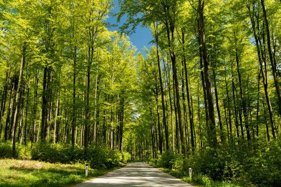 buchenwald im satten grün 2020-04-26