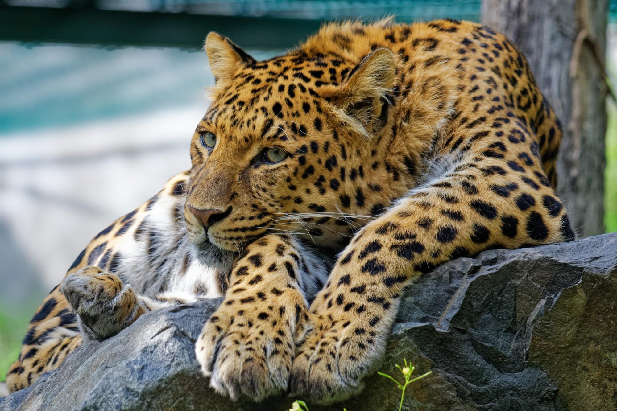 chinaleopard 2021-08-08