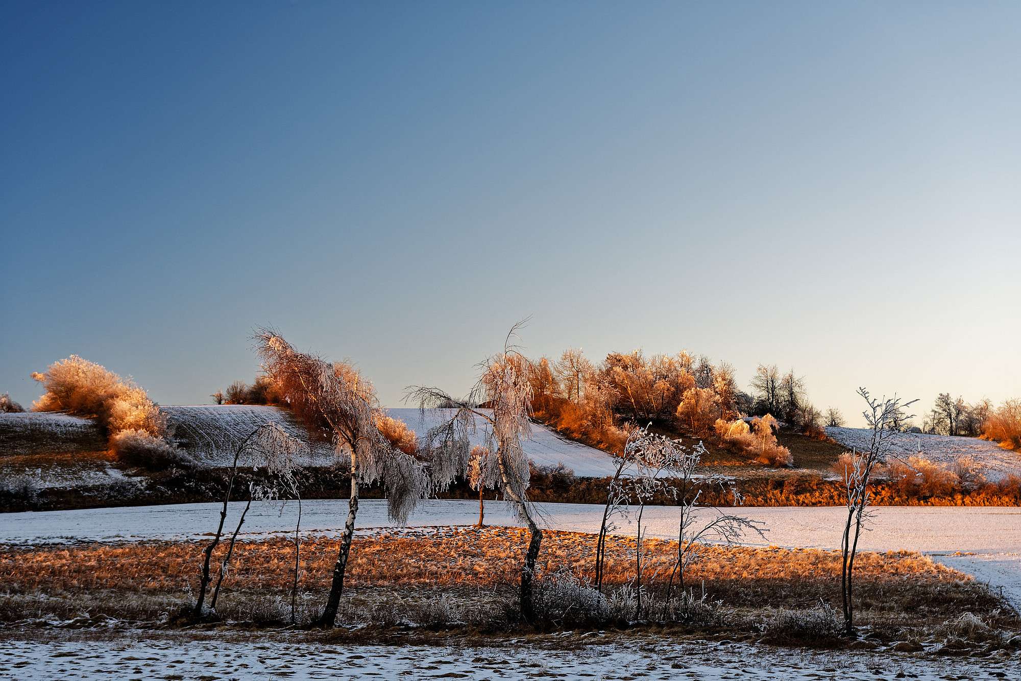 eisbäume im abendlicht 2021-02-24