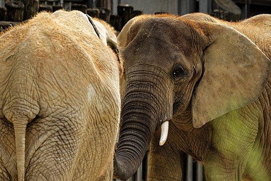 elefanten handshake 2020-06-24