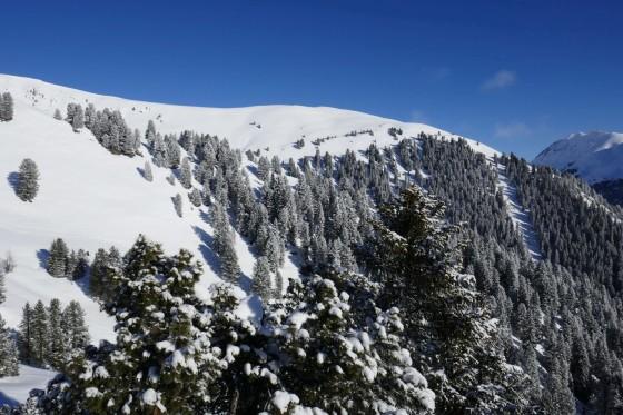 frisch verschneiter wald königsleiten