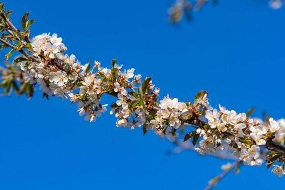 frühlingsblüten 2020-06-10