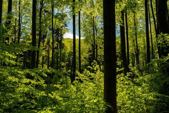 grün braun grün 2020-04-26