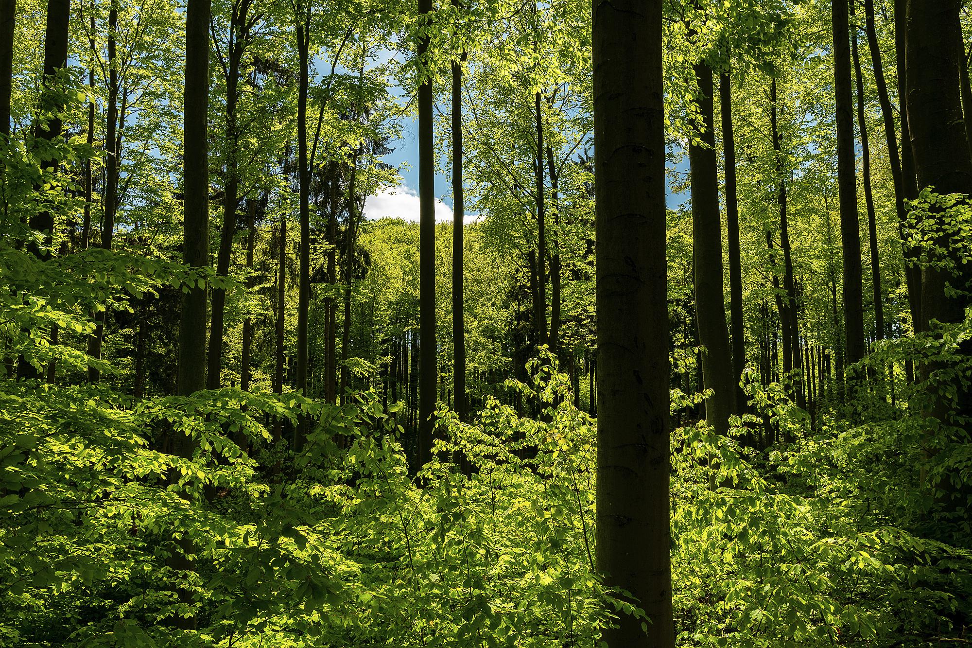 grüner frühlingswald 2020-11-24