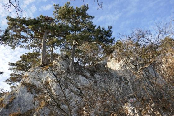 hanselsteig ausstieg mit bäumen