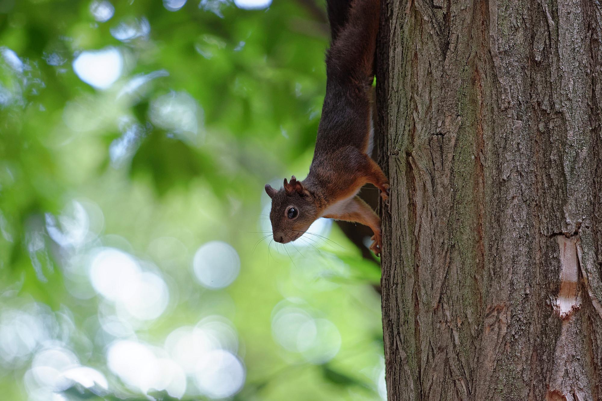 neugieriges eichhörnchen 2020-09-27