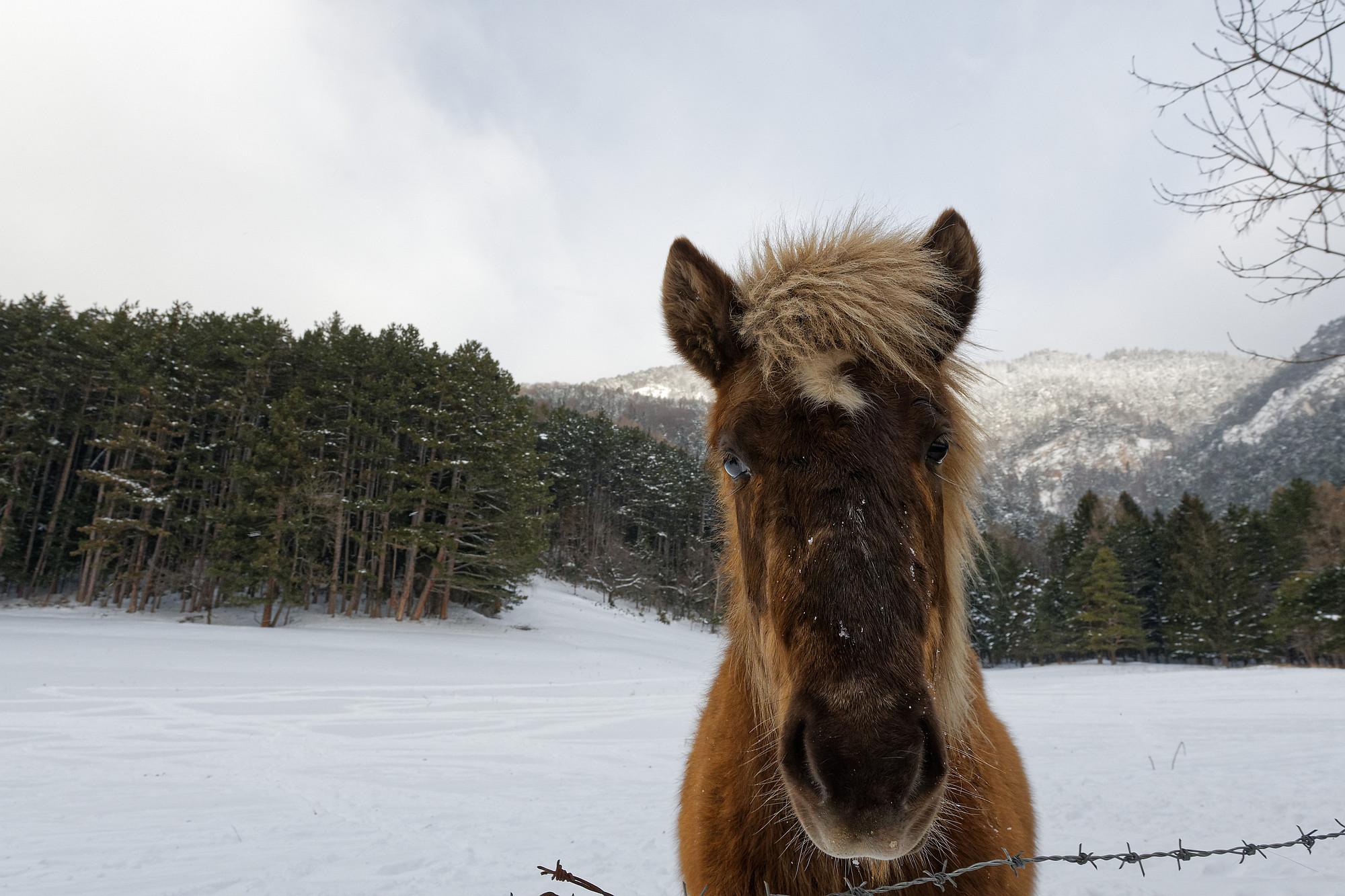 pony im schnee 2021-01-26