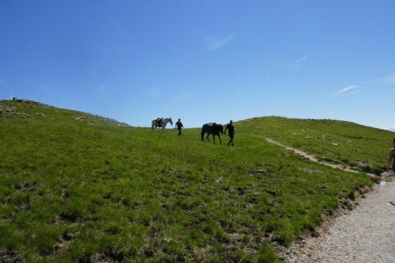 sogar pferde am augstsee