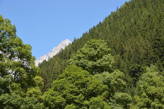 weisser dachstein hinter grünen bäumen