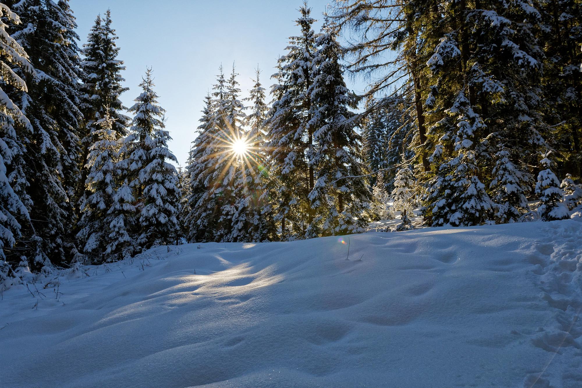 wintersonne im wald 2021-01-25